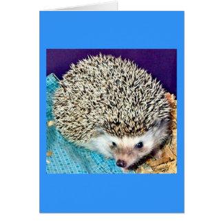Liotiハリネズミ カード
