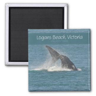 Logansのビーチのビクトリアオーストラリアクジラの腕時計の磁石 マグネット