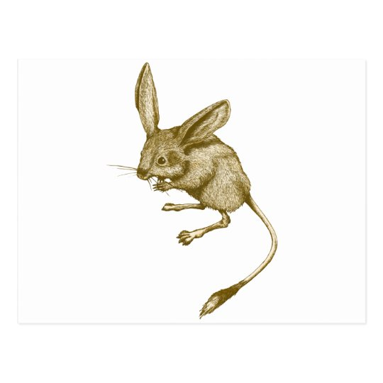 Long eared Jerboa ポストカード