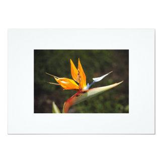 Lorette Starrの招待状による写真極楽鳥 カード