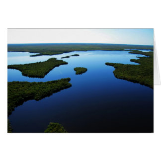 Lostmanの川、フロリダの沼沢地、2010年1月 カード
