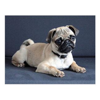 Loungingソファの子犬 ポストカード