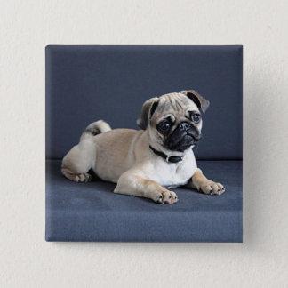 Loungingソファの子犬 缶バッジ