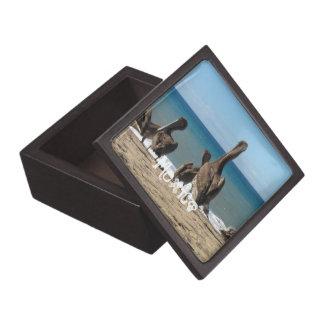 Loungingビーチのペリカン; メキシコの記念品 ギフトボックス