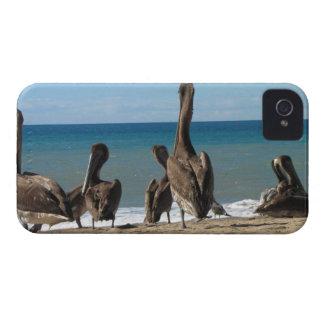 Loungingビーチのペリカン; 文字無し Case-Mate iPhone 4 ケース