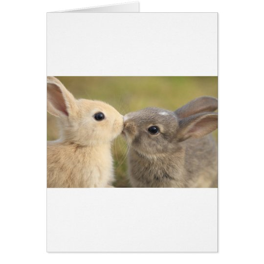 loving rabbit カード