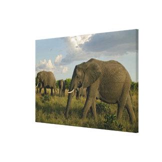 、Loxodontaのafricana牧草を食べている、アフリカゾウ キャンバスプリント