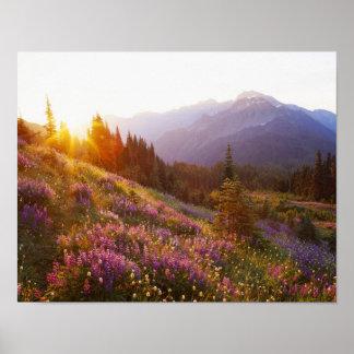 lupineそしてオリンピック山の分野の ポスター