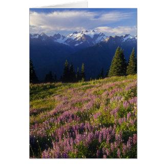 lupine、オリンポスの山および雲の分野の カード