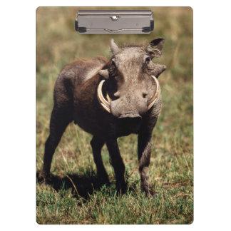 Maasaiマラの国立保護区、砂漠Warthog クリップボード