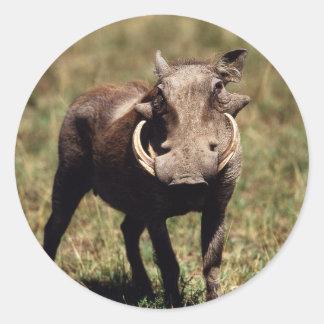 Maasaiマラの国立保護区、砂漠Warthog ラウンドシール