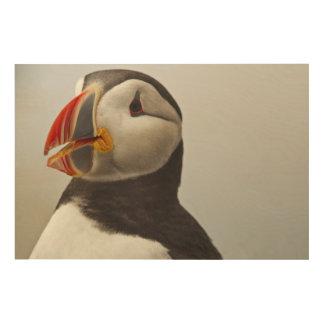 Machiasのシールの島のニシツノメドリ ウッドウォールアート