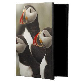 Machiasのニシツノメドリはを離れて島を密封します iPad Airケース