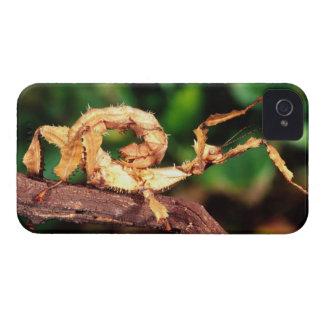 Macleayの幽霊(Spineyの棒昆虫)、 Case-Mate iPhone 4 ケース