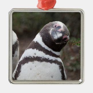 Magellanicのペンギンのポートレート メタルオーナメント