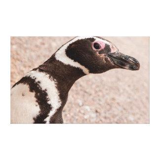 Magellanicのペンギン、パタゴニア、アルゼンチン キャンバスプリント