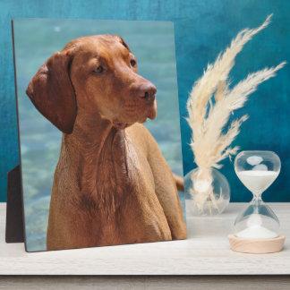 MagyarのVizsla犬 フォトプラーク