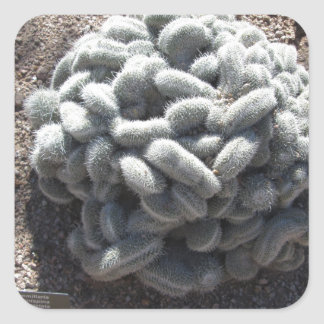 Mammillariaのサボテン スクエアシール