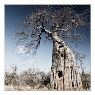 ManaのBaobabの木は国立公園、ジンバブエを分かち合います ポスター