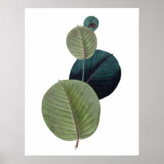 manihotの葉の植物の優れた質のプリント ポスター