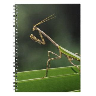 MantidのMantidae、やし葉状体、インの大人 ノートブック
