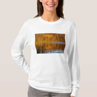 Maplewoodの州立公園の秋色近く Tシャツ