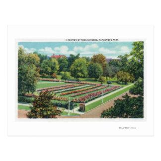 Maplewood公園のバラ園の眺め ポストカード