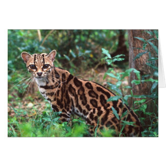 MargayのLeopardusのwiedi、メキシコへの先住民への カード