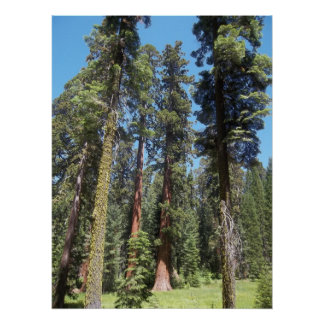 Mariposa果樹園の木 ポスター