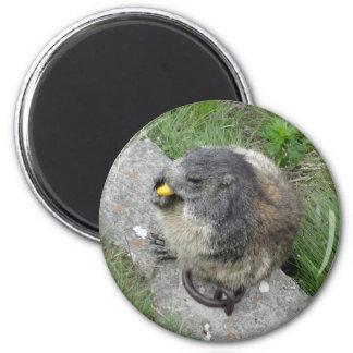 Marmotの磁石 マグネット