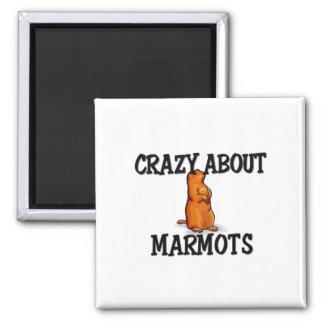 Marmotsについて熱狂する マグネット