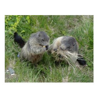 Marmotsの郵便はがき ポストカード