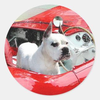 Maseratiのステッカーの白いボクサー犬 ラウンドシール