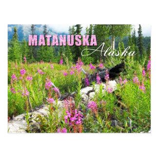 Matanuskaの谷、アラスカのFireweedの花 ポストカード
