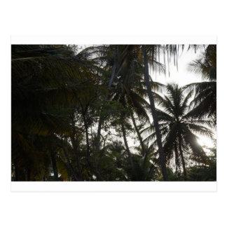 MayaroのビーチのPlamの木 ポストカード