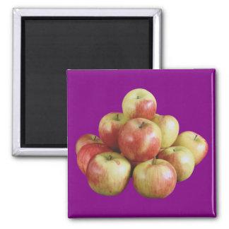 Mcintoshのりんご マグネット