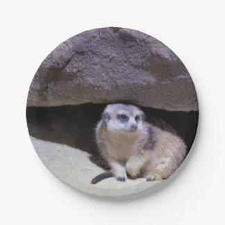Meerkatの写真 ペーパープレート