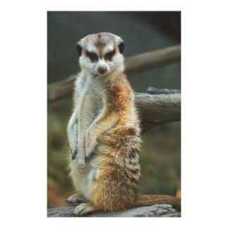 Meerkatの写真 便箋