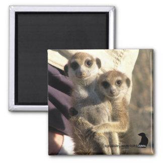 Meerkatの抱擁友人-磁石 マグネット