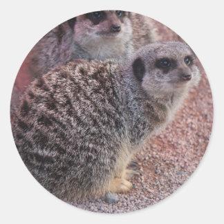 Meerkatの狂気 ラウンドシール