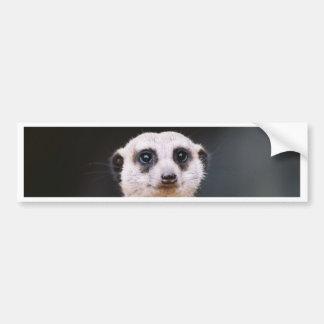 Meerkatの眺望のバンパーステッカー バンパーステッカー