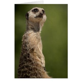 Meerkatの眺望 カード