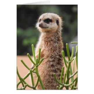 Meerkat カード