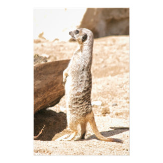 Meerkat 便箋