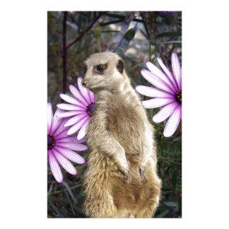 Meerkat_And_Daisies、_ 便箋