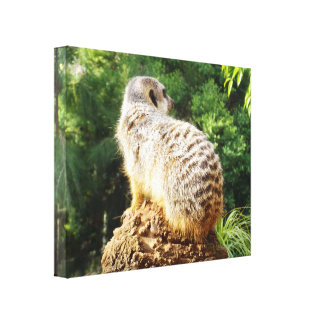 Meerkat_On_Watch、_Large_Wrapped_Canvas_Picture. キャンバスプリント