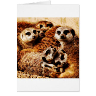 Meerkatsの系列 カード