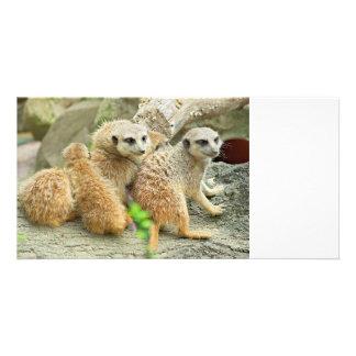 meerkatsの系列-写真カード カード