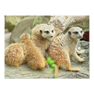Meerkatsの系列-招待 16.5 X 22.2 インビテーションカード