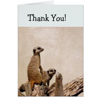 Meerkatsの2サンキューカード カード